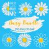 Daisy bundle